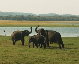 De pracht van Sri Lanka