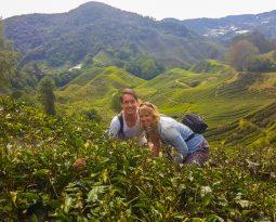 Cameron Highlands, Maleisië: is dit toeristische hoogtepunt de moeite waard?