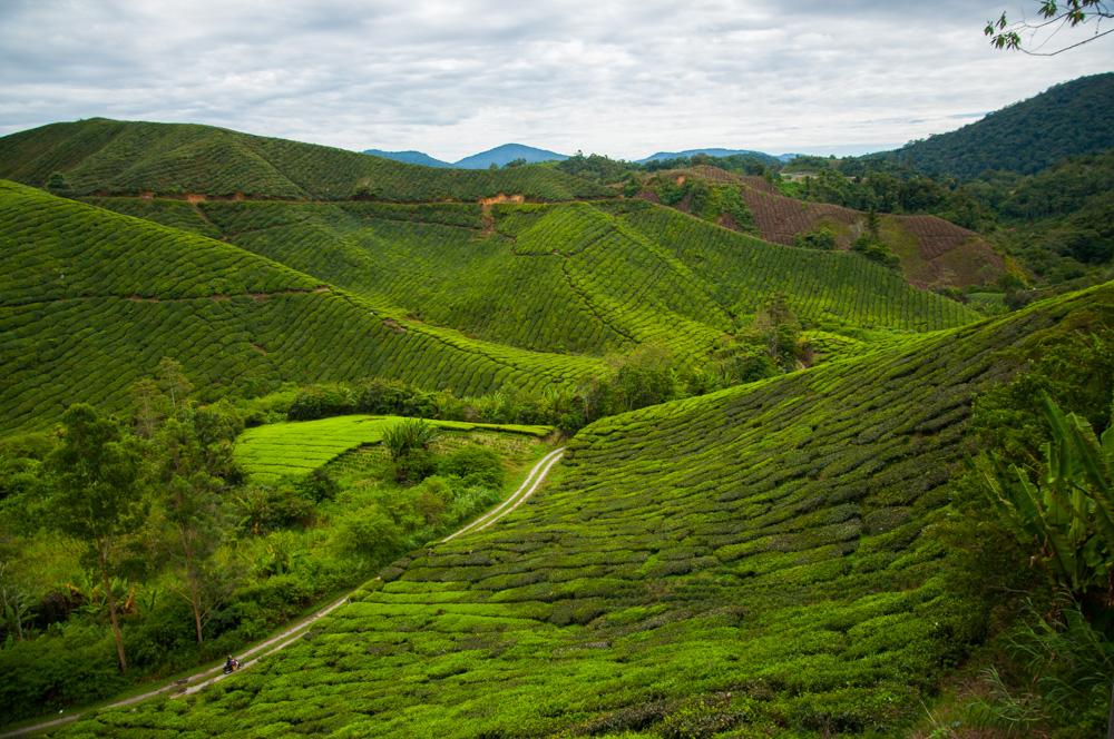 route door Maleisië - uitzich Cameron Highlands