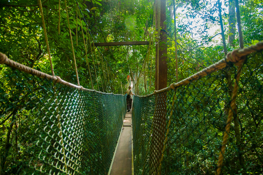 route door Maleisië - Canopy Walk in Taman Negara