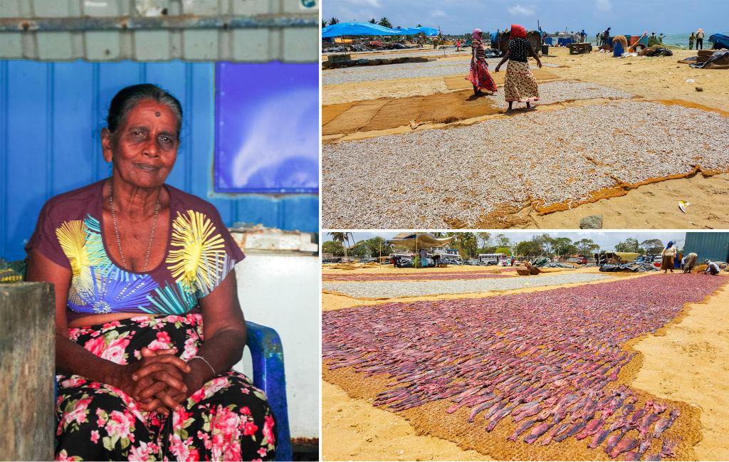 Doen in Sri Lanka - vismarkt Negombo