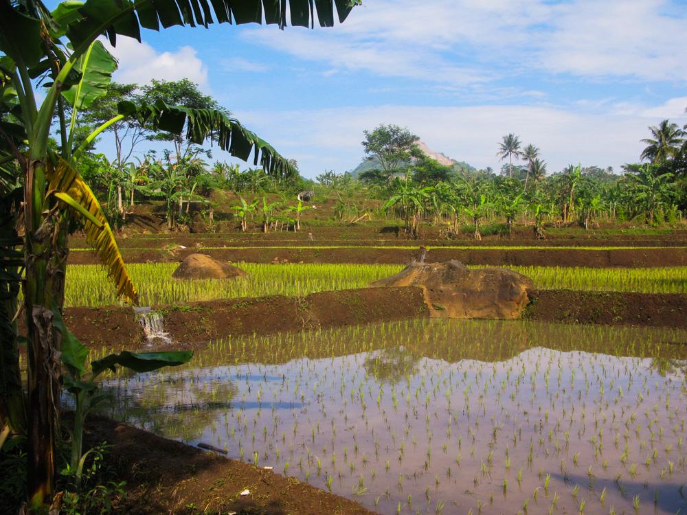 vaccinaties voor onze wereldreis - rijstterassen op Java