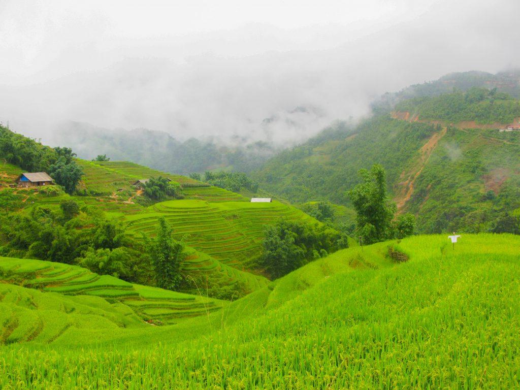 doen in Vietnam - rijstvelden Sapa