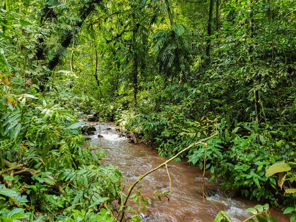 trekking in Nam Ha National Park