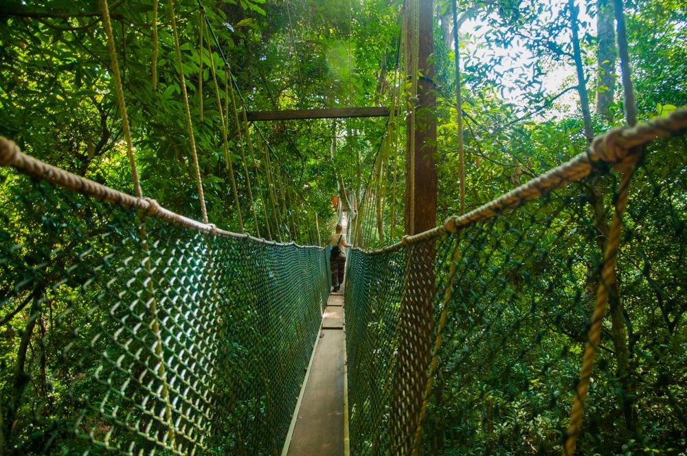 wat te doen in Maleisië - Canopy walk