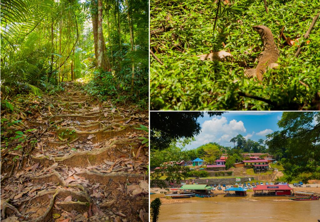 wat te doen in Maleisië - taman negara