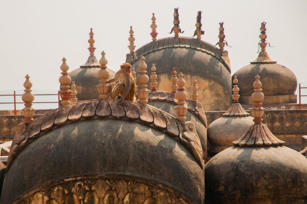 doen in Jaipur