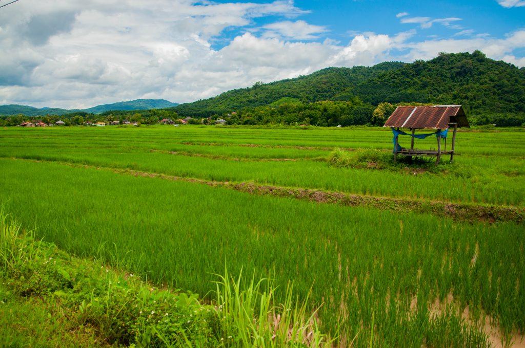 doen in Laos