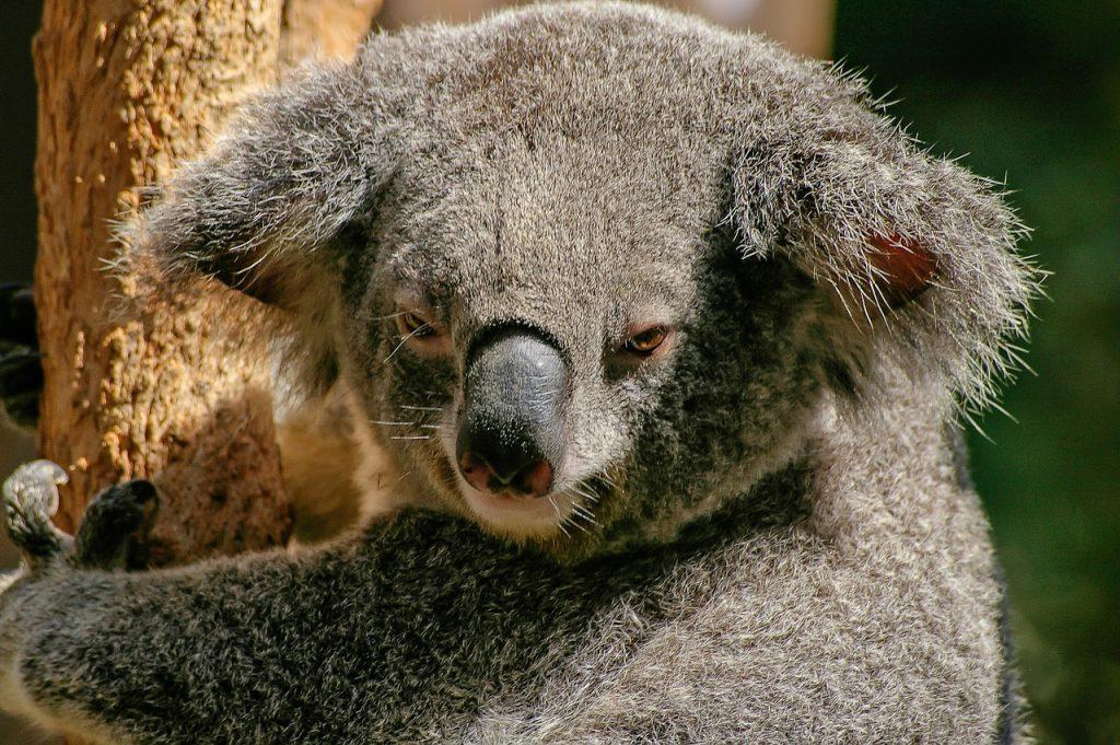 Visum Australïe