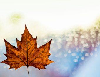 Eta Canada aanvragen: hoe werkt het?