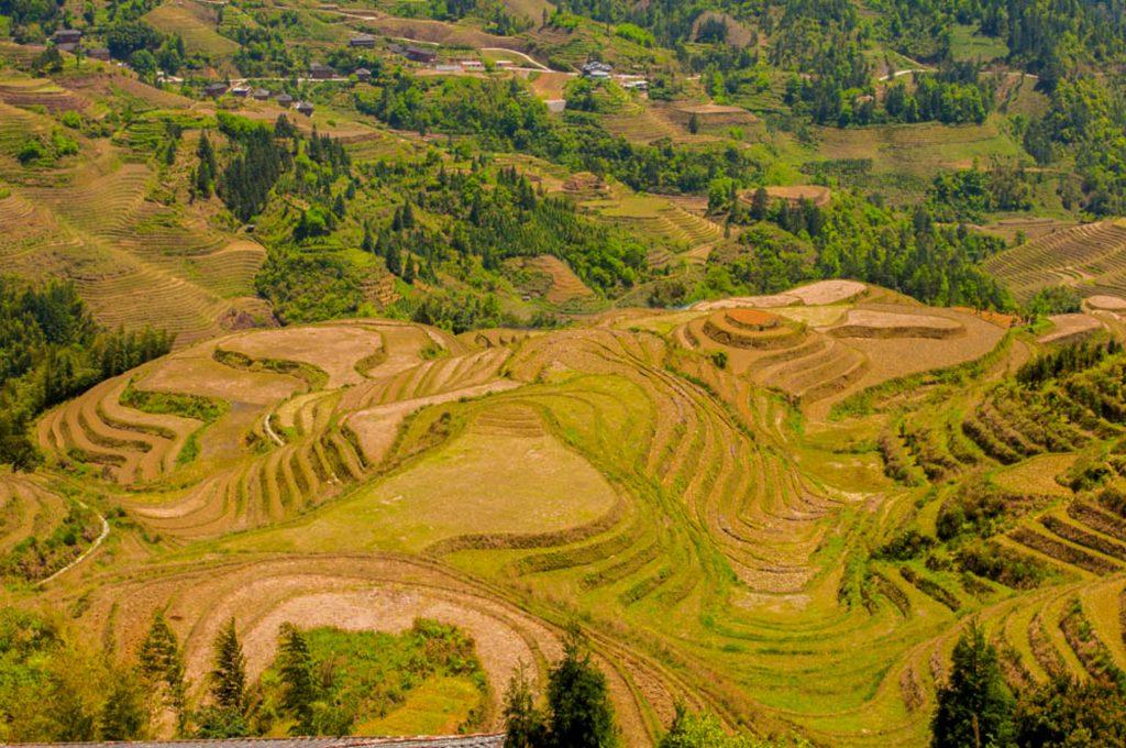 rijstvelden Longji